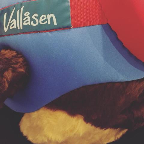 Björnbusen flyttar in i Vallåsen!