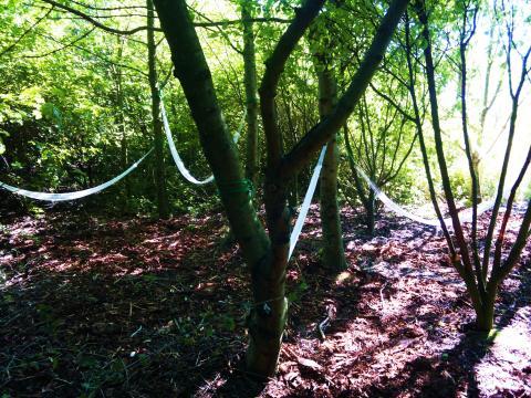 Sommarlund: Hängmattor i träden under Sagovandring i Brunnshög