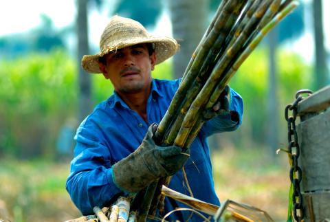 Lantbruksarbetare