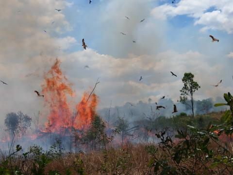 Cerradoen står i flammer: tusind kvadratkilometer er allerede brændt op