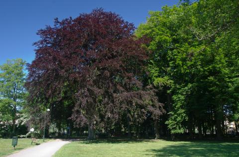 Malmö utnämns till en Tree City of the World