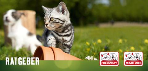 Fressnapf-Tierratgeber 09/2019: Katzen altersgerecht füttern - Was kommt in den Napf?