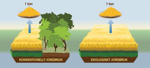 Ekologisk mat är sämre för klimatet