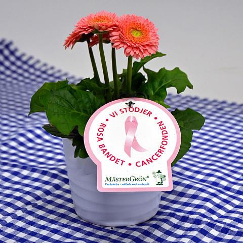 Dagens Rosa Produkt 11 oktober - en småblommig Gerbera från Mäster Grön