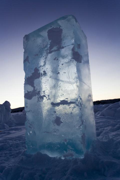 1,5 ton is fra Europas sidste vildmark lander i Danmark