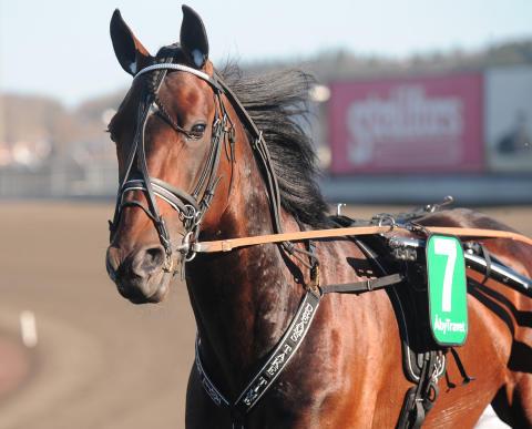 Söndag: Fyra svenska hästar i Criterium Continental
