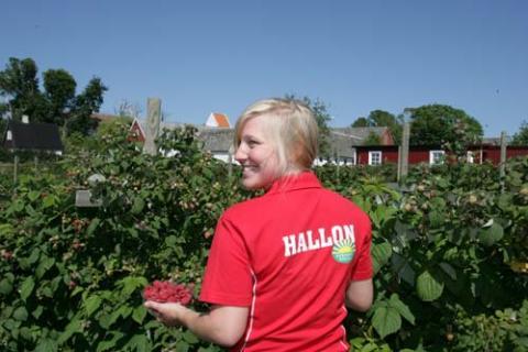 Närmare mat i Trelleborg