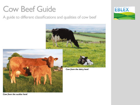 EBLEX launches new guide to cow beef