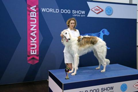 World Dog Show – Leipziger Messe präsentiert die größte Hundeschau der Welt