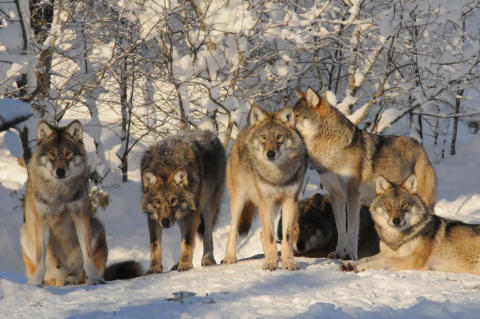 Lär dig om rovdjur 2 mars