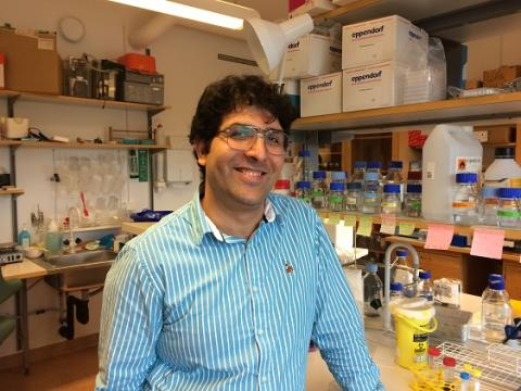 Viqar Banday, Institutionen för klinisk mikrobiologi, immunologi, Umeå universitet