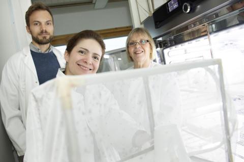 Forskare i mygglab