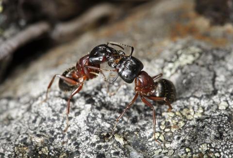 Maur inne på vinteren - typisk tegn på angrep