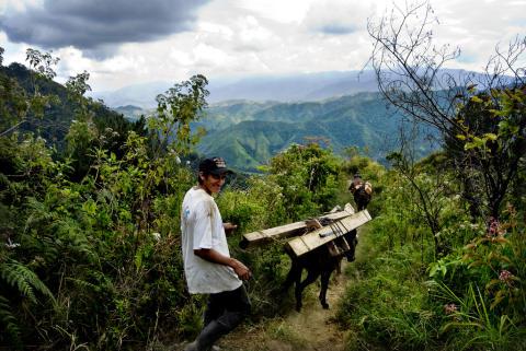 Bæredygtig skovbrug i Honduras