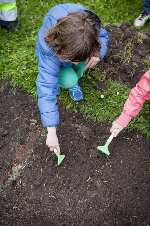 Mer än tusen förskolebarn är med och sår sommaräng i Malmös parker