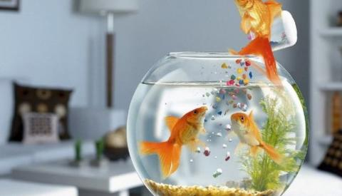 Ornamental Fish Feed Consumption Market Growth by 2027 Involving Prominent Players Such as  PT Central Proteina Prima Tbk, sera GmbH, Taiyo Feed Mill Pvt Ltd., Tianjin Dongjiang Food Co., Ltd.
