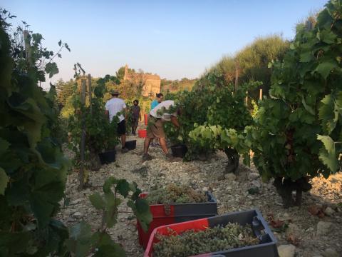 4 exklusiva viner signerade Louis Barruol från Château de Saint Cosme lanseras