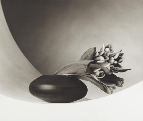Wetterling Gallery visar utvalda fotografier av Robert Mapplethorpe