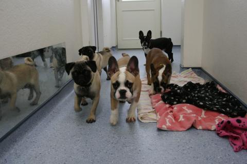 Puppies pic 1
