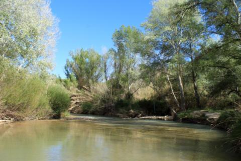 Ekosystem med många och liknande arter tål större miljöstörningar