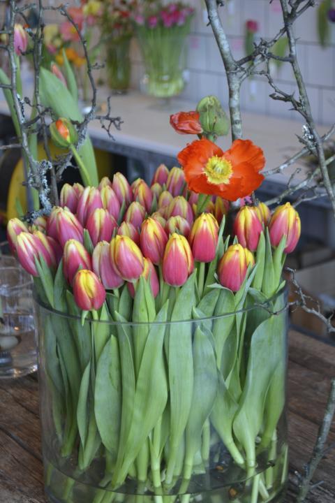 'Leen van der Mark' - en populär tulpansort i Sverige