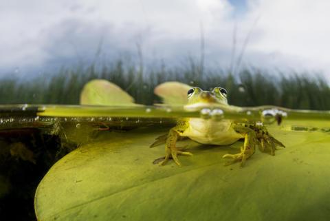 Amphibia – att leva på hoppet