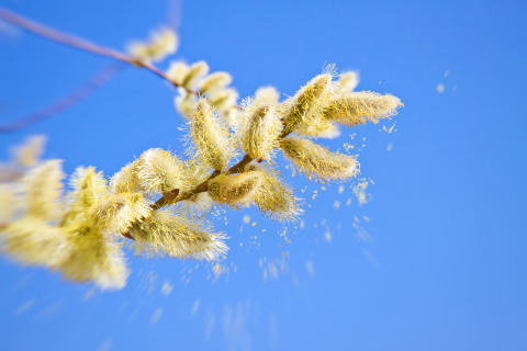 The high cost of hay fever