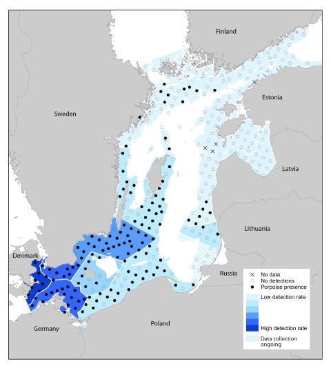 Här finns tumlarna i Östersjön!