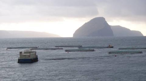 Marine Harvest to trial run ASC certification