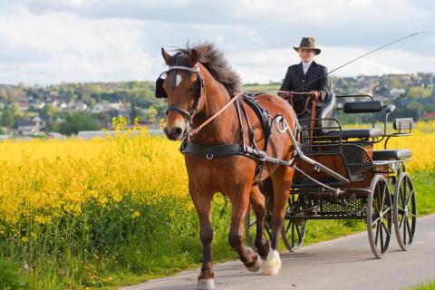 Hästfest på Tyresö slott - körsport