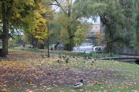 Delar av Strömparken stängs av