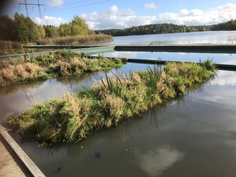 Så här renar framtidens vattenväxtsystem vatten med hjälp av dess naturliga invånare