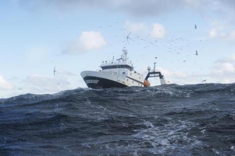 Prisløft for torsken
