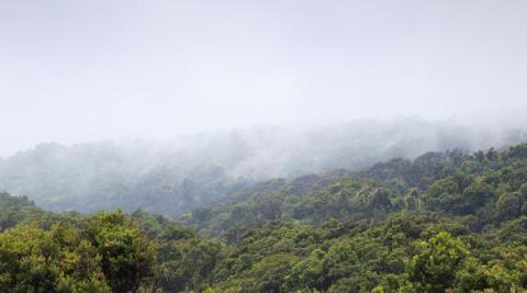 Nestlén tavoite: Tuotteiden metsäkatovaikutus nollaan – jo 77% tuotetaan metsiä hävittämättä