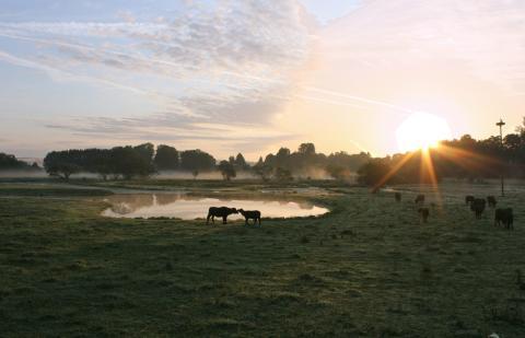 UNESCO biosfærereservat Bliesgau med vannbøffel