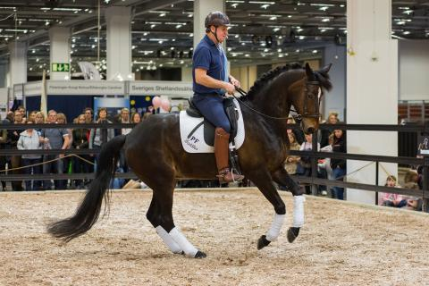 89 100 besökare kom till årets hästfest i Göteborg