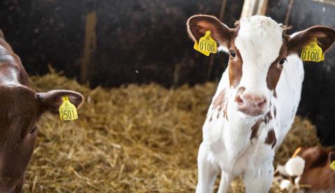 Nya rutiner för beställning av märkningsutrustning för djur