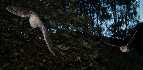 DNA-metoder avslöjar arternas samspel i naturen