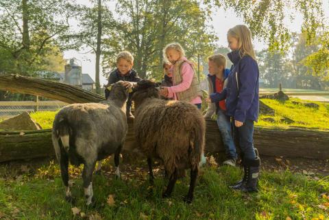 Barn och får