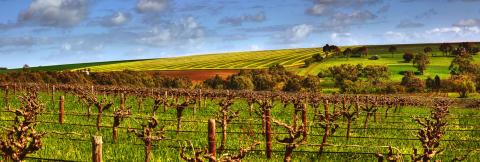 Ett glas vin från världens äldsta land