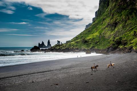 Islandshästar på stranden