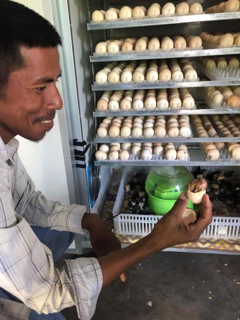 Kyllingefarme forbedrer familiernes vilkår