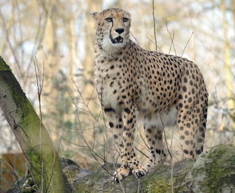 Sportliche Oster-Rallye durch den Zoo - den schlausten und flinksten Tieren auf der Spur