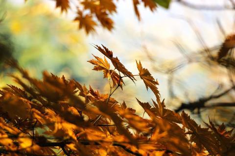 Efteråret er den bedste tid at plante nyt i haven