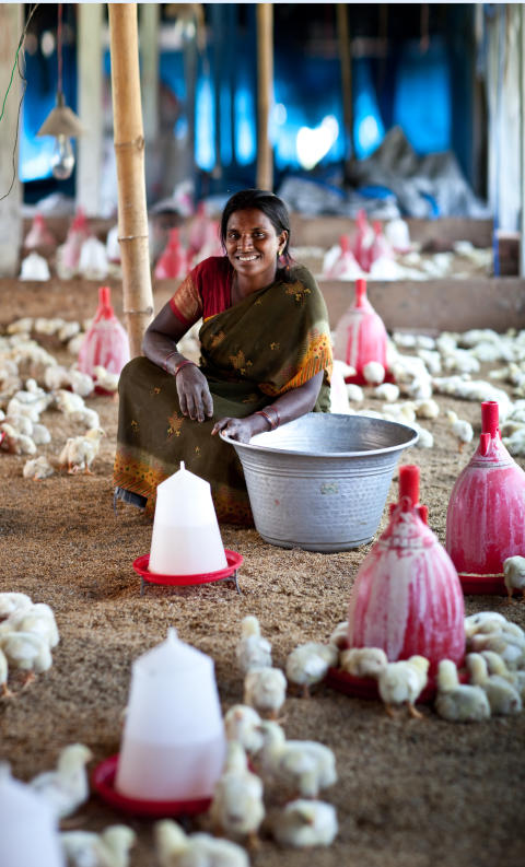 Kvinna som äger egen kycklingfarm, Hand in Hand