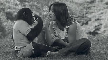 """Oscarsnominerade """"Project Nim"""" som visas i SVT ikväll ställer frågan om schimpanser som försöksdjur på sin spets"""
