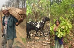 Nepals tropiska skogar kan både brukas och bevaras