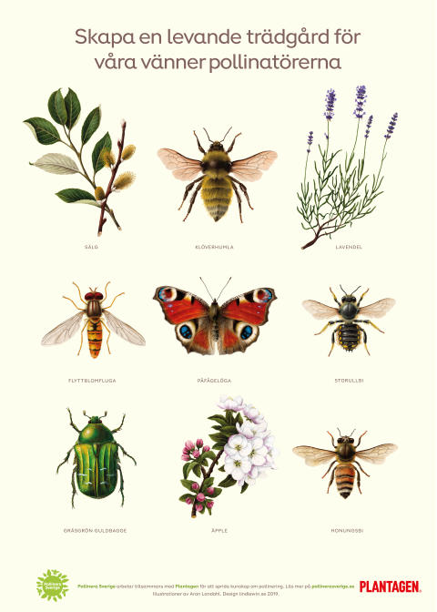 skylt insects 1000x1400 Plantagen small