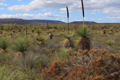 Växters artrikedom bevaras tack vare jordlevande organismer