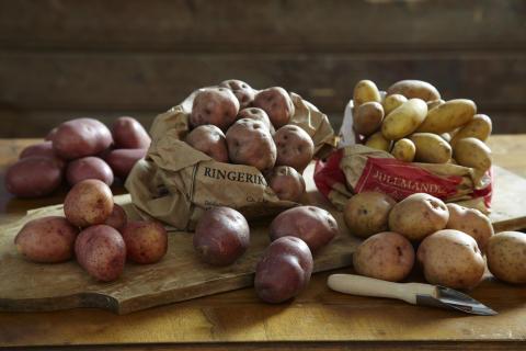 Det finnes mange ulike sorter poteter med ulike egenskaper. De er store og små, kokefaste eller melne.  Hvilke velger du?